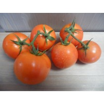 Tomate grappe cat. II